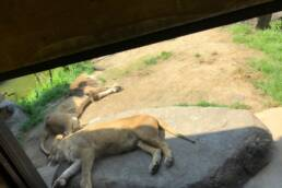 at animal park