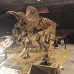 """<span class=""""title"""">「子どもと恐竜」の写真が撮りやすい、大阪ティラノサウルス展</span>"""